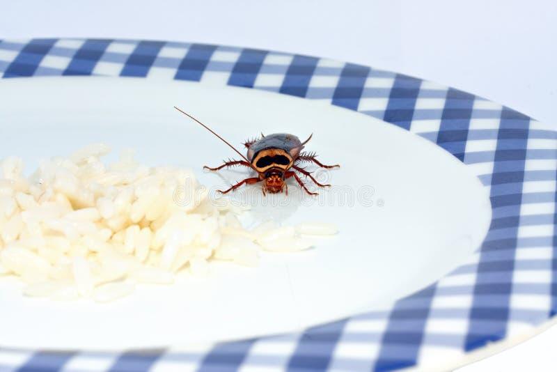 κατσαρίδα προσέγγισης στοκ φωτογραφία