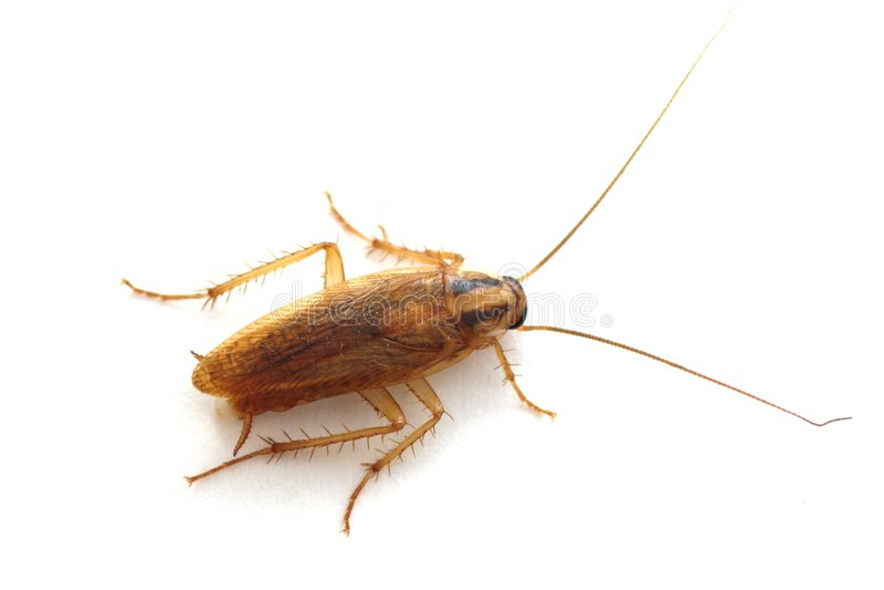 κατσαρίδα στοκ φωτογραφίες