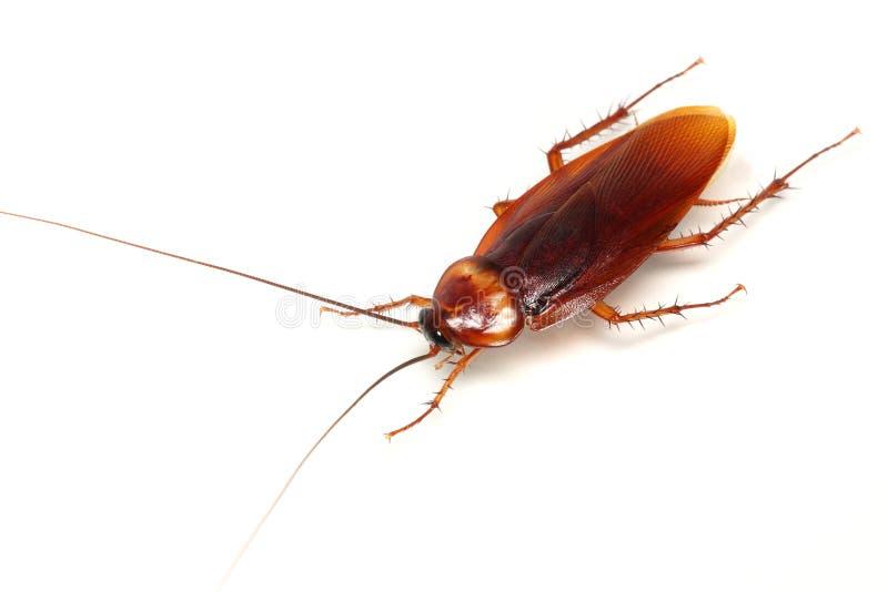 κατσαρίδα στοκ φωτογραφία με δικαίωμα ελεύθερης χρήσης