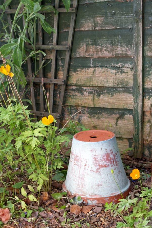 Κατσαρίδες και ανεστραμμένο φυτό, μικρή γωνιά του κήπου στοκ φωτογραφίες με δικαίωμα ελεύθερης χρήσης