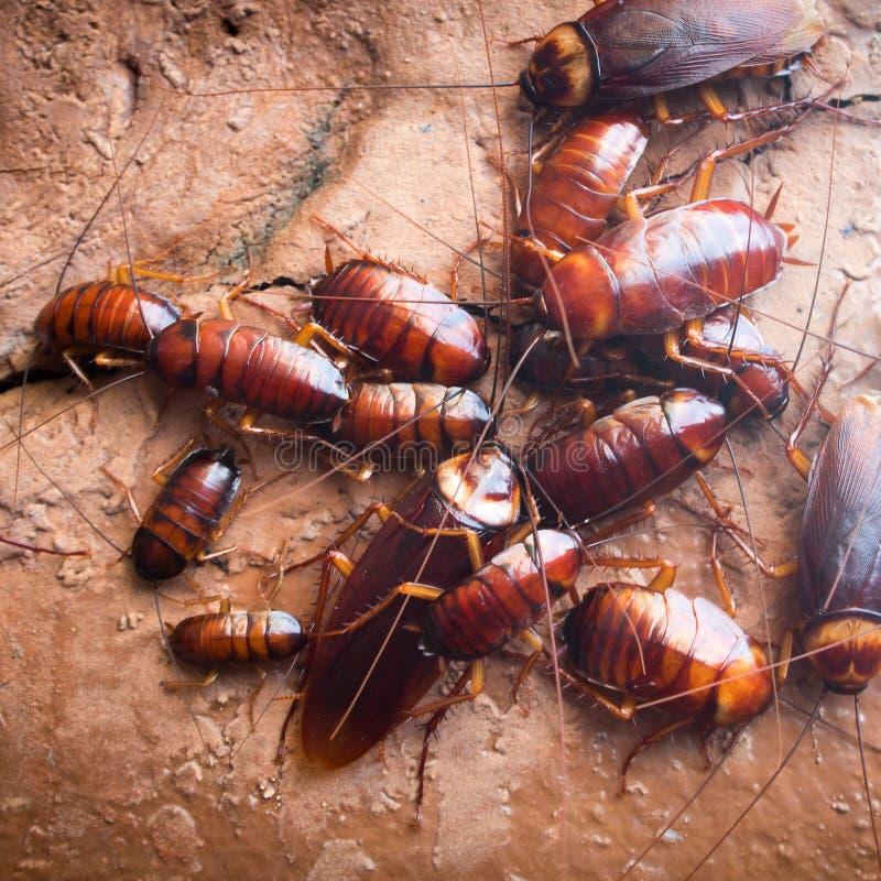 κατσαρίδα στοκ εικόνα