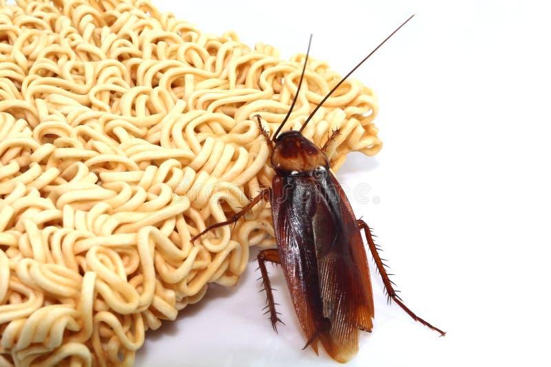 Κατσαρίδες γραπτές στοκ φωτογραφίες