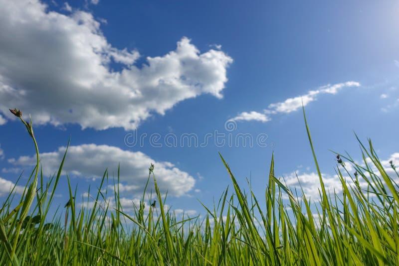 Κατώτατη άποψη από την πράσινη χλόη ενάντια στο μπλε ουρανό στοκ εικόνα