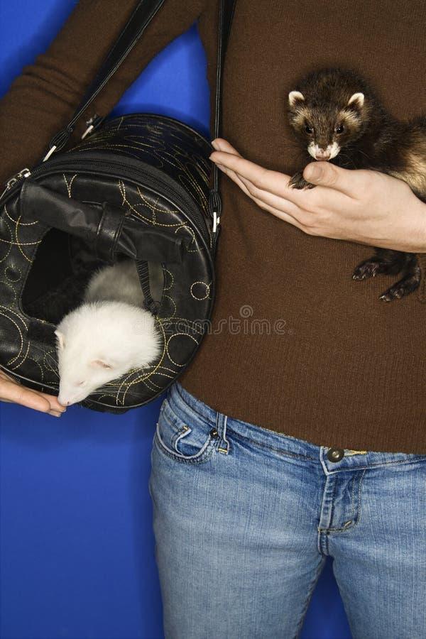 καυκάσια κρατημένη κουνάβια γυναίκα κατοικίδιων ζώων στοκ εικόνα
