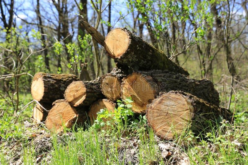 Καυσόξυλο στο δάσος στοκ φωτογραφία