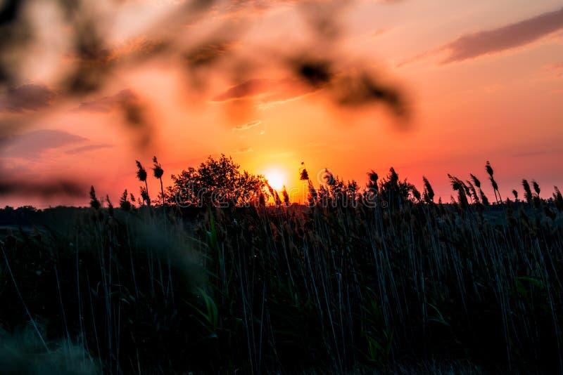 Καυτά και θερμά χρώματα και σκιές των όμορφων τοπίων της Ρωσίας στην περιοχή του Ροστόφ Τοπικοί τομείς των ανθίζοντας κίτρινων ηλ στοκ εικόνα με δικαίωμα ελεύθερης χρήσης