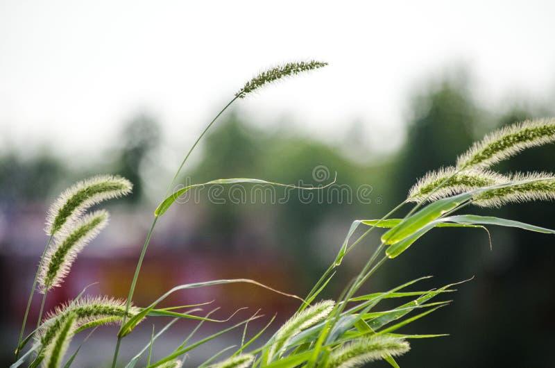 καυτός θερινός σίτος πεδίων ημέρας στοκ φωτογραφία με δικαίωμα ελεύθερης χρήσης