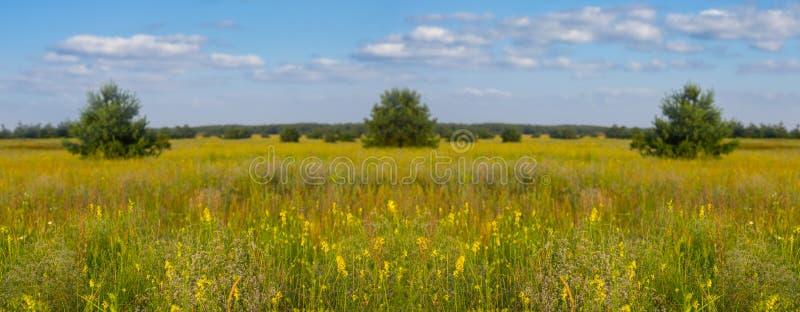 Καυτό θερινό λιβάδι με τα λουλούδια κάτω από έναν νεφελώδη ουρανό στοκ εικόνα με δικαίωμα ελεύθερης χρήσης
