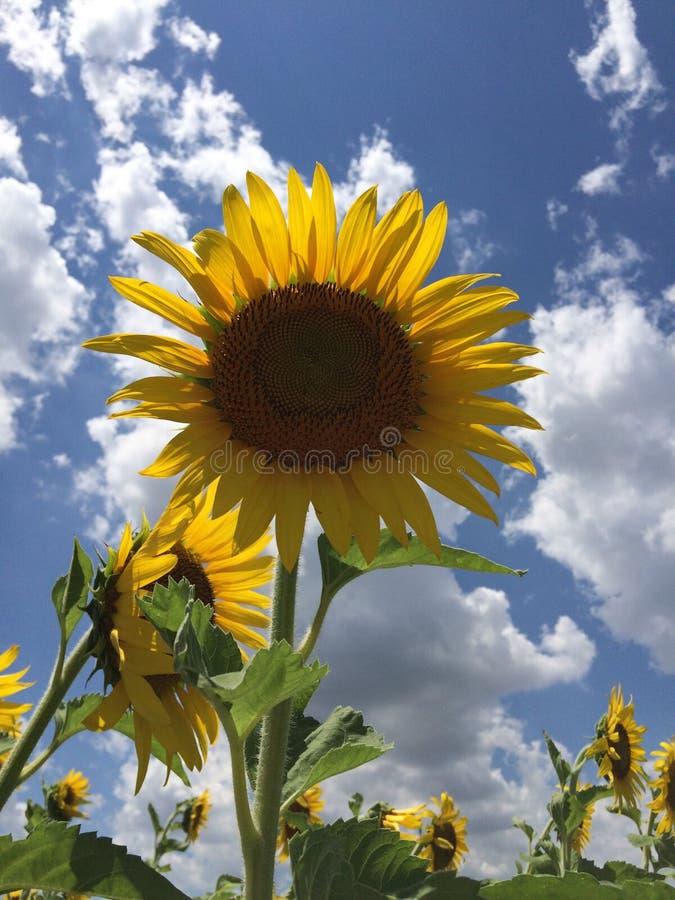 καυτό καλοκαίρι ημέρας στοκ εικόνες με δικαίωμα ελεύθερης χρήσης