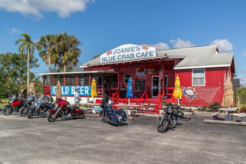 Καφές Joanie σε Everglades, Φλώριδα στοκ φωτογραφία με δικαίωμα ελεύθερης χρήσης