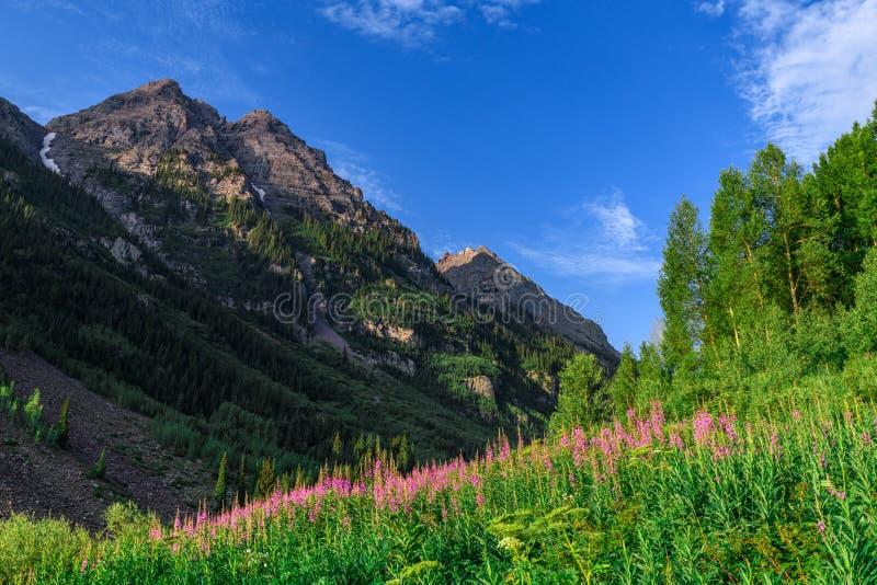 Καφέ αγριότητα βουνών κουδουνιών στοκ εικόνες με δικαίωμα ελεύθερης χρήσης