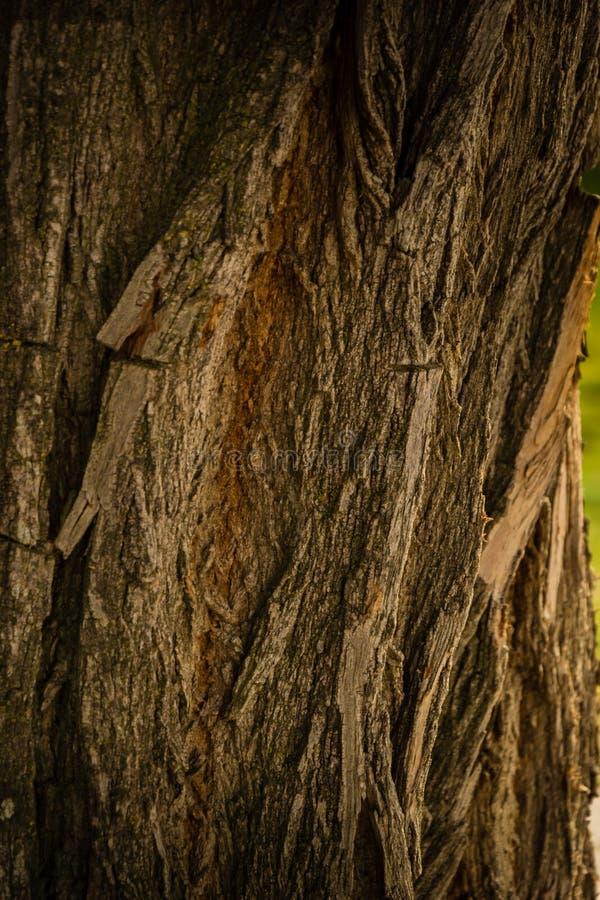 Καφετής κορμός δέντρων ένα φθινοπωρινό απόγευμα στοκ εικόνες με δικαίωμα ελεύθερης χρήσης