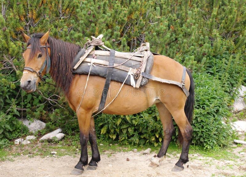 Καφετί άλογο πακέτων με το sandle στο βουνό στοκ εικόνες