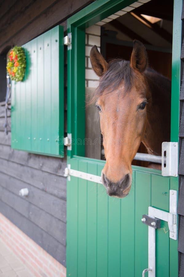 Καφετί άλογο στο σταύλο στοκ φωτογραφία