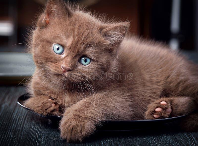 Καφετί γατάκι στο μαύρο πιάτο στοκ φωτογραφίες
