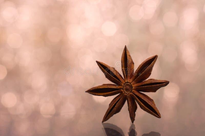 Καφετί γλυκάνισο αστεριών, ανατολικό ασιατικό καρύκευμα με το υπόβαθρο bokeh στοκ φωτογραφίες με δικαίωμα ελεύθερης χρήσης