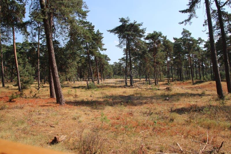 Καφετί δάσος λόγω της ξηρότητας στις Κάτω Χώρες κατά τη διάρκεια του καλοκαιριού του 2018 στοκ εικόνες με δικαίωμα ελεύθερης χρήσης
