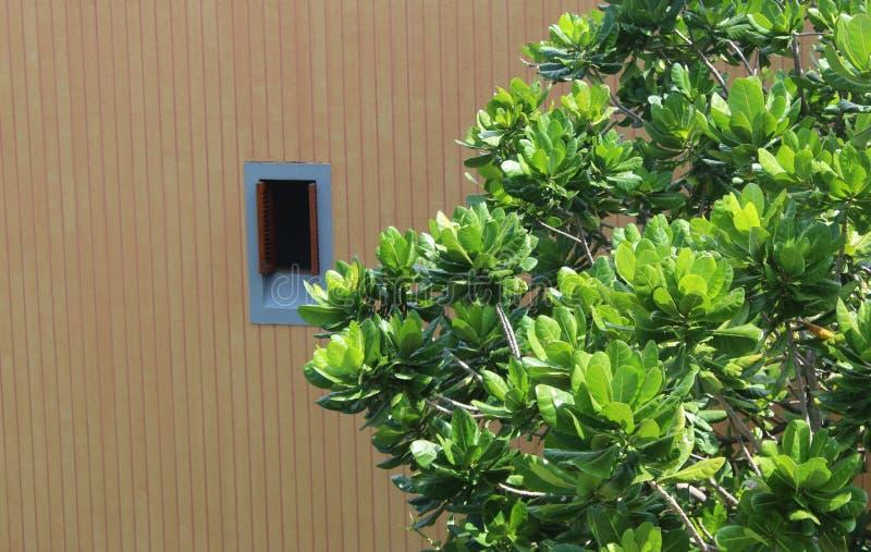 Καφετί κτήριο χρώματος με ένα παράθυρο και το πράσινο δέντρο φύλλων στοκ φωτογραφίες
