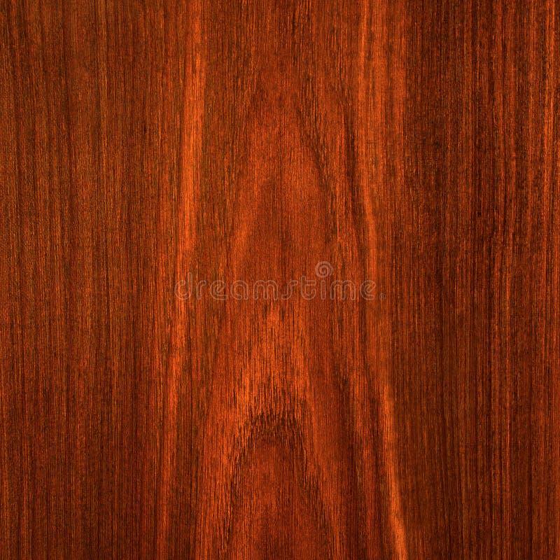 καφετί κόκκινο δάσος στοκ φωτογραφίες με δικαίωμα ελεύθερης χρήσης