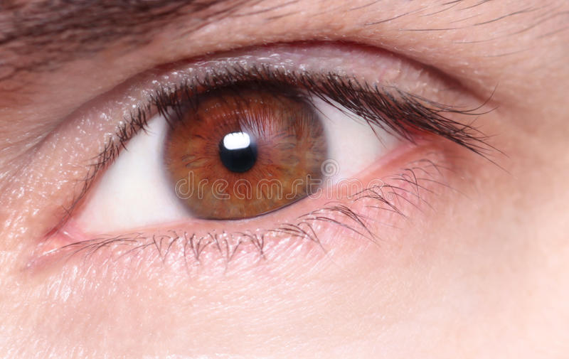 Καφετί μάτι με το μακρο πυροβολισμό, στοκ εικόνα με δικαίωμα ελεύθερης χρήσης