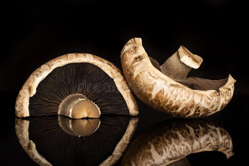 Καφετί μανιτάρι bortobello που απομονώνεται στο μαύρο γυαλί στοκ φωτογραφίες
