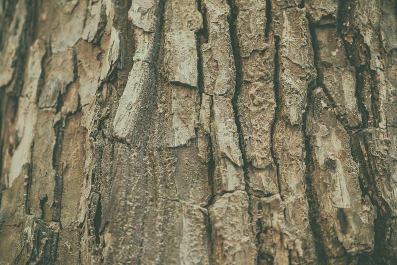 καφετί υπόβαθρο σύστασης επιφάνειας φλοιών δέντρων στοκ φωτογραφίες