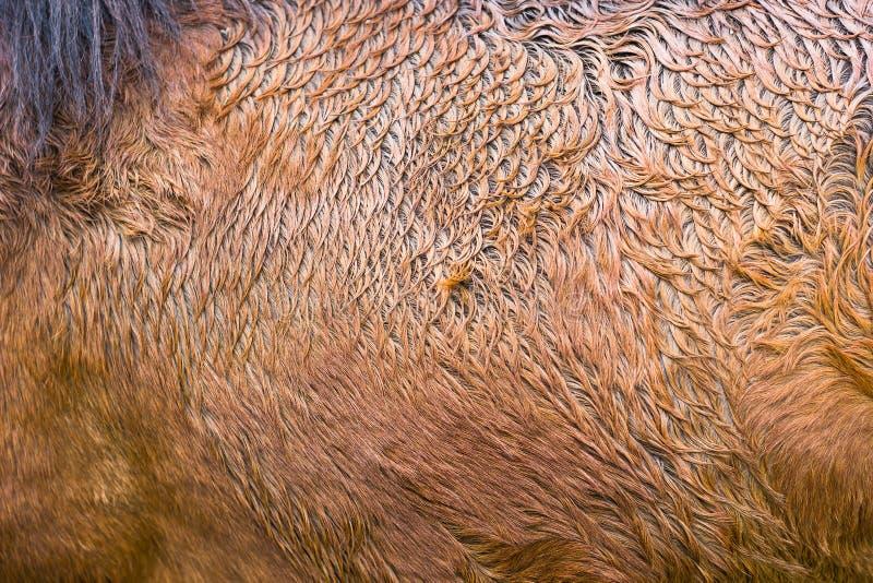 Καφετί υπόβαθρο σύστασης σχεδίων γουνών αλόγων αφηρημένο ζωικό δέρμα στοκ φωτογραφίες