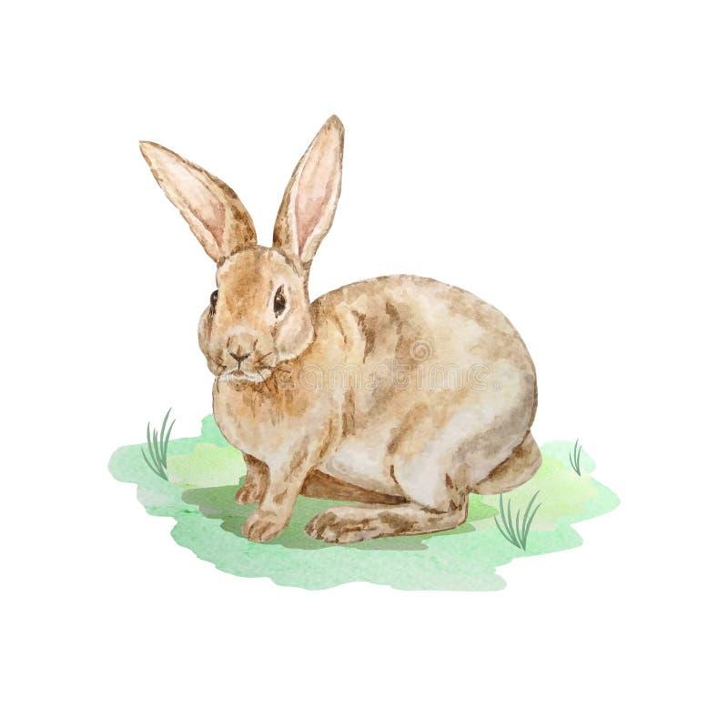Καφετί rubbit Πάσχας Watercolor στο χορτοτάπητα διανυσματική απεικόνιση