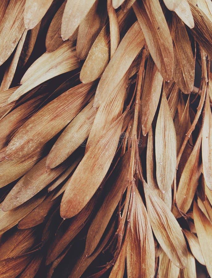 Καφετιά αεράκια φύλλων στοκ φωτογραφίες