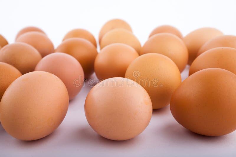 Καφετιά αυγά κοτόπουλου με κάποιο διάστημα μεταξύ κάθε ενός σε ένα άσπρο υπόβαθρο στοκ εικόνα με δικαίωμα ελεύθερης χρήσης