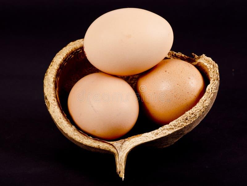 Καφετιά αυγά σε ένα κοχύλι καρύδων στοκ φωτογραφίες με δικαίωμα ελεύθερης χρήσης