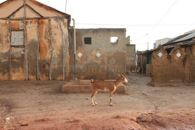 Καφετιά αφρικανική εικόνα στοκ εικόνες