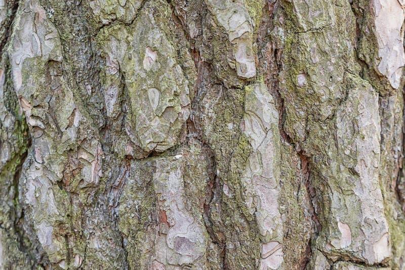 Καφετιά ξύλινη δέντρων φωτογραφία σύστασης φλοιών ατελείωτη στοκ εικόνα με δικαίωμα ελεύθερης χρήσης