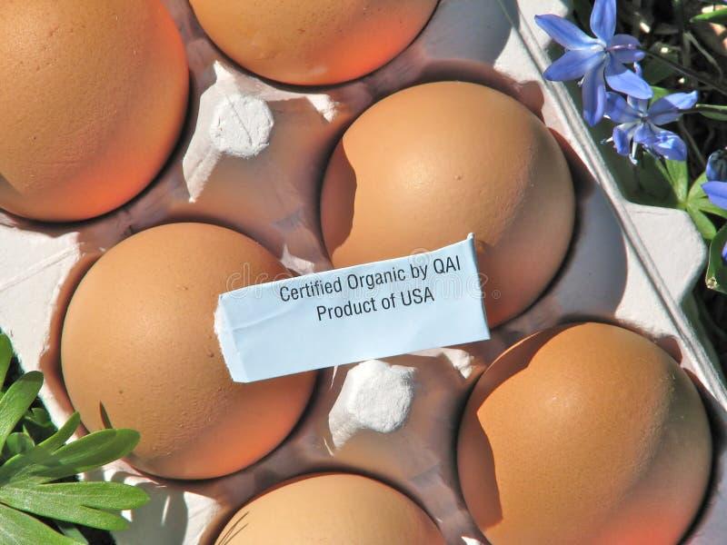 Καφετιά οργανικά αυγά στο χρησιμοποιημένο χαρτοκιβώτιο αυγών εγγράφου με την επικυρωμένη οργανική ετικέτα στοκ εικόνα