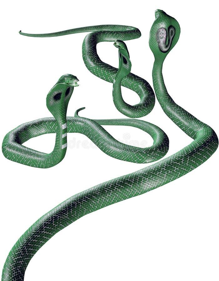 καφετιά φίδια ομάδας cobra διανυσματική απεικόνιση