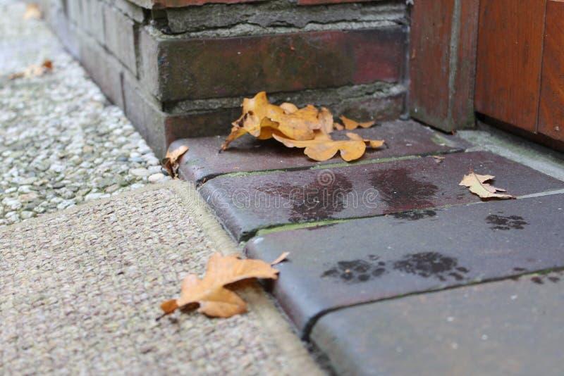 Καφετιά φύλλα και πόδια γατών στοκ φωτογραφίες