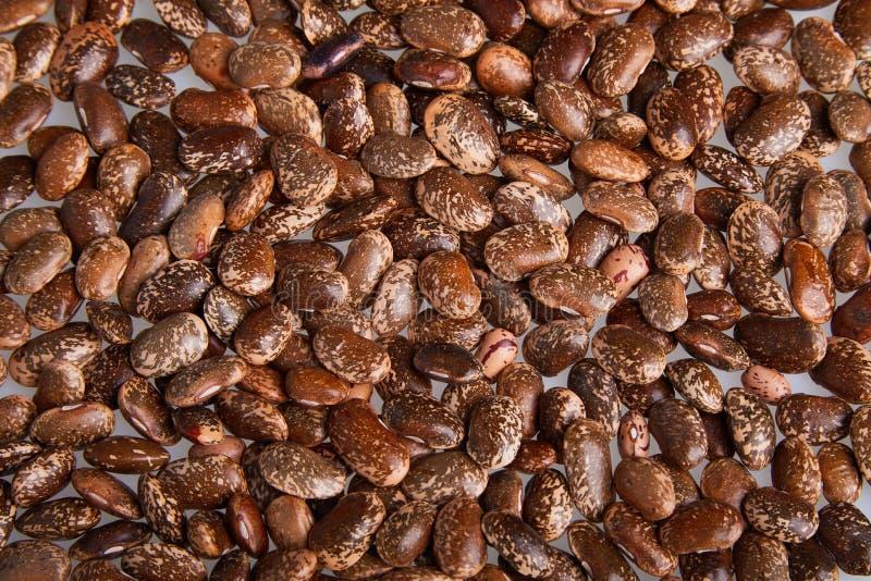 Καφετιά Speckled φασόλια νεφρών που απομονώνονται στο άσπρο υπόβαθρο στοκ εικόνες