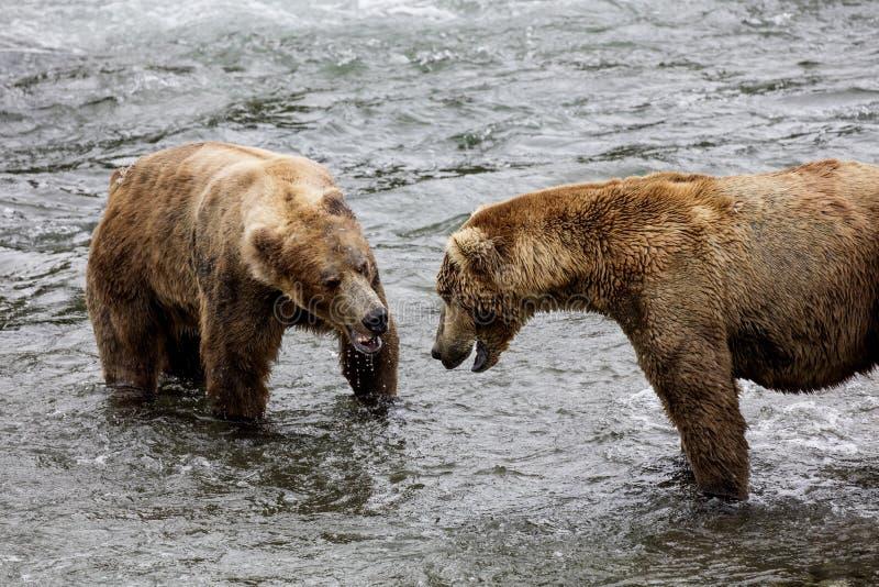 Καφετιές αρκούδες Katmai  Πτώσεις ρυακιών  Αλάσκα στοκ φωτογραφίες