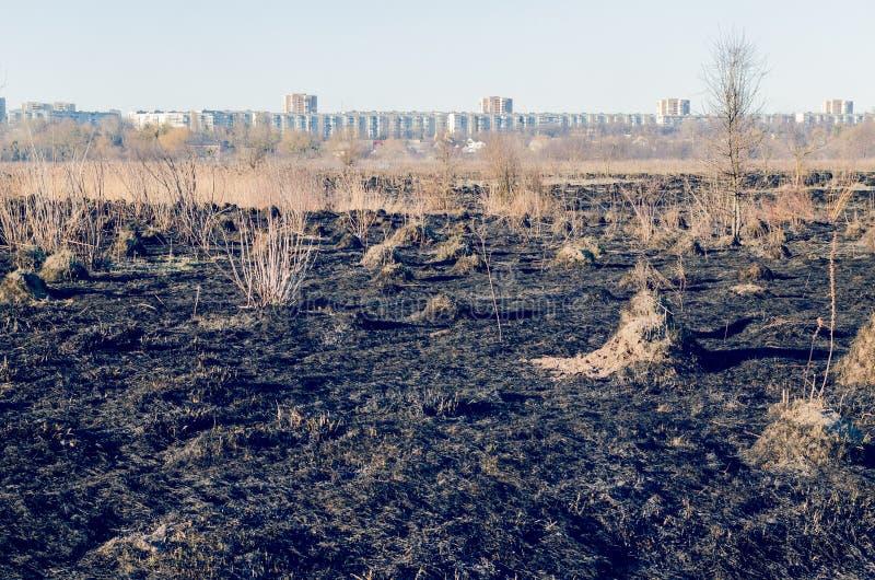 Καψαλισμένη παλαιά ξηρά χλόη στον τομέα Κίνδυνος πυρκαγιάς στοκ εικόνες