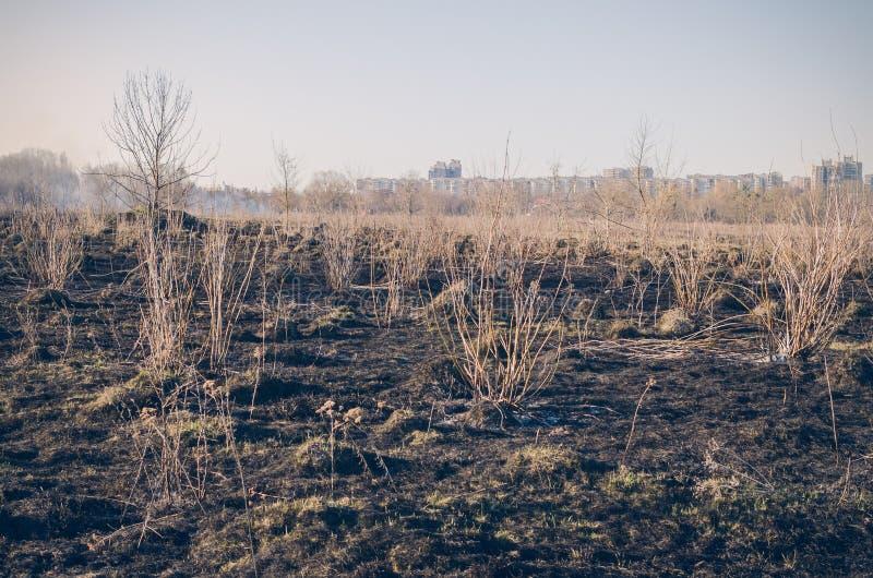 Καψαλισμένη παλαιά ξηρά χλόη στον τομέα Κίνδυνος πυρκαγιάς στοκ εικόνα