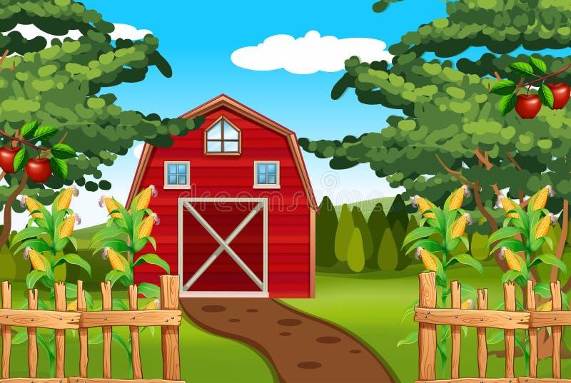 Καλαμπόκι και μήλα στο αγρόκτημα ελεύθερη απεικόνιση δικαιώματος