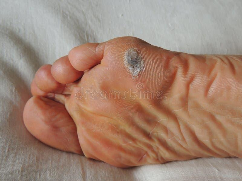 Καλαμπόκι με τα πόδια στοκ εικόνα με δικαίωμα ελεύθερης χρήσης