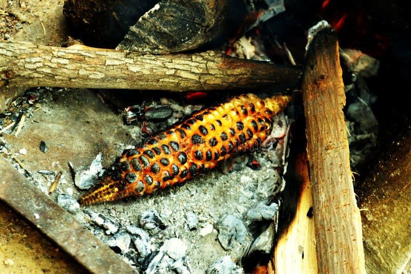 Καλαμπόκι στα ξύλα στοκ εικόνες με δικαίωμα ελεύθερης χρήσης