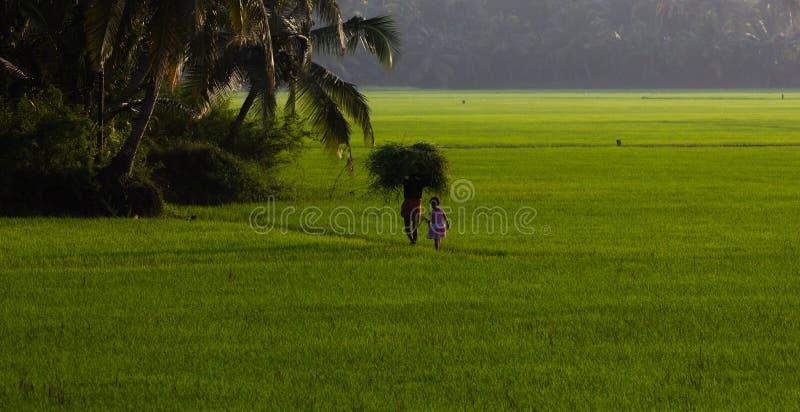 Καλλιεργήσιμα εδάφη Kuttanad στοκ εικόνα με δικαίωμα ελεύθερης χρήσης