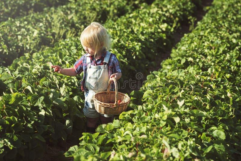 Καλλιεργήστε την εποχιακή έννοια αύξησης φύσης κήπων στοκ φωτογραφίες με δικαίωμα ελεύθερης χρήσης