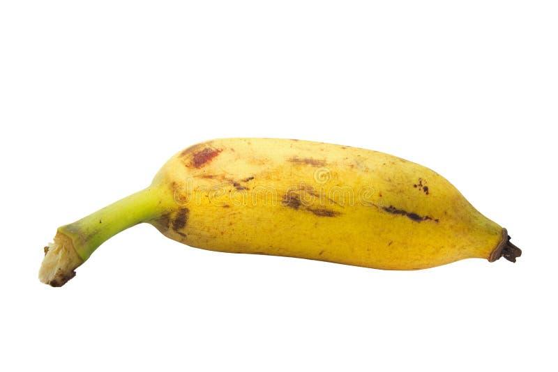 Καλλιεργημένη μπανάνα στο άσπρο υπόβαθρο με το ψαλίδισμα του ελαφριού κτυπήματος στοκ εικόνα