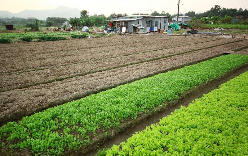 Καλλιεργημένο έδαφος στοκ εικόνες
