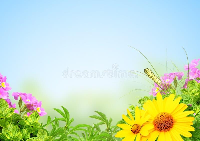 καλοκαίρι πλαισίων στοκ εικόνα με δικαίωμα ελεύθερης χρήσης