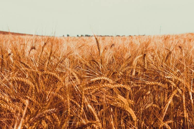 Καλοκαίρι στην Ουκρανία στοκ φωτογραφία με δικαίωμα ελεύθερης χρήσης