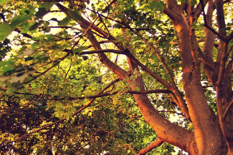 Καλοκαίρι φύσης δέντρων άνοιξης φθινοπώρου στοκ φωτογραφία με δικαίωμα ελεύθερης χρήσης